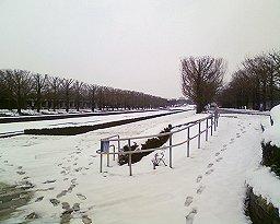 天使の眠る並木道
